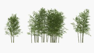 3D bamboo wind
