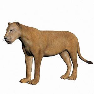 Lioness 3D model