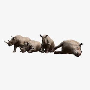 3D Rhino Collection