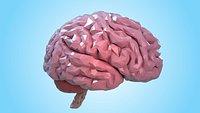 Brain Low-poly