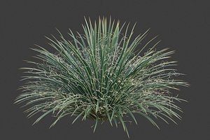 3D XfrogPlants Twin-Flowered Agave - Agave Geminiflora model