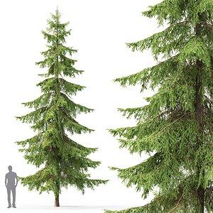 spruce tree nature model