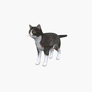 British Short Cat model