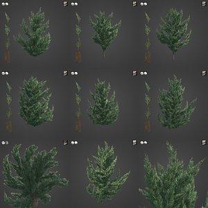 2021 PBR Chinese Juniper Collection - Juniperus Chinensis Kaizuka 3D