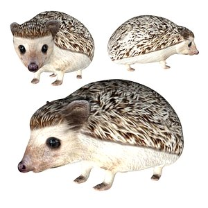Realistic Fully rigged low poly Hedgehog model