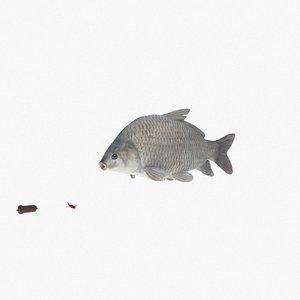 smallmouth buffalo fish carp 3D