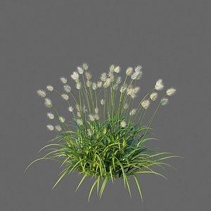 XfrogPlants Bunnytail - Lagurus Ovatus 3D model