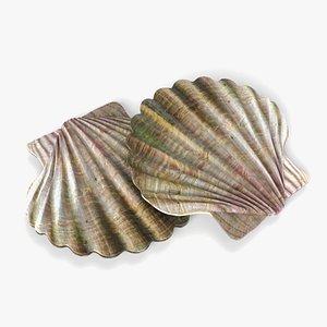 seashell shell sea 3D model