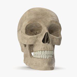 Male Skull 3D