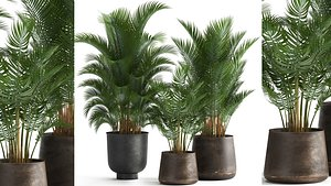 Decorative palm in a Flowerpot for the interior 954 model