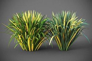 3D model XfrogPlants Blueberry Lily - Dianella Revoluta
