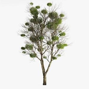 3D Tree With Mistletoe model