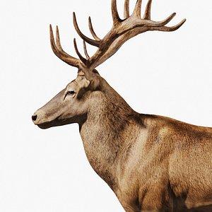 3D Reed Deer Stag1