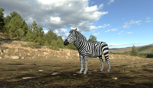 3D zebra animal wildlife model