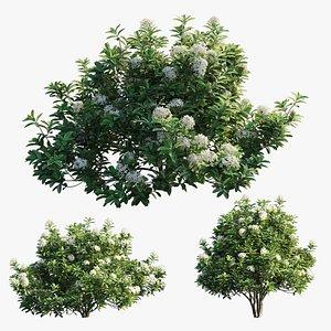 3D plant set 23