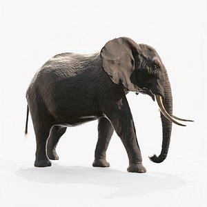 africa african elephant model