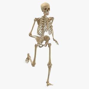3D model human male female