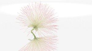 Barringtonia asiatica flower decor 3D model