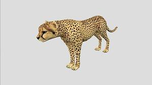 3D cheetah rigged model