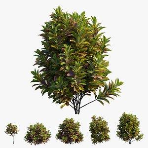 Croton plant set 15 3D