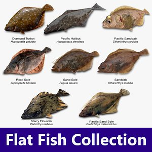 Flat Fish Collection 3D model