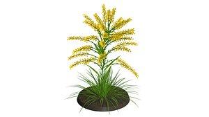 3D flora nature grass model