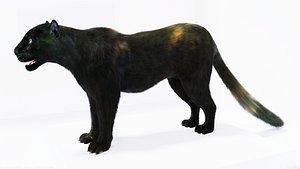 fur black panther 3D model