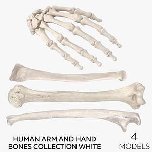 3D Human Arm and Hand Bones Collection White - 4 model
