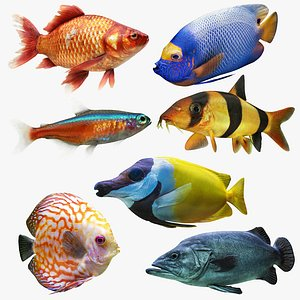Fish Collection 3D