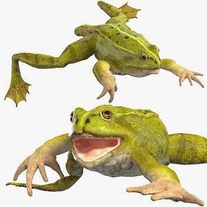 Froglet Rigged for Cinema 4D model