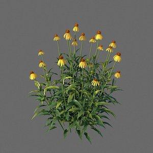 XfrogPlants Yellow Coneflower - Echinacea Paradoxa 3D model