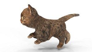 3D Fur Cute Cat Kitten 01 Animated model
