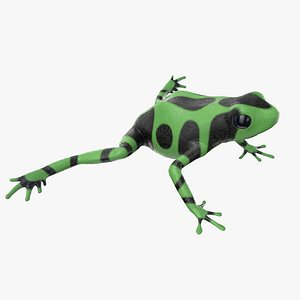 green poison dart frog 3D model