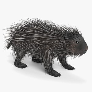 porcupine american 3D model