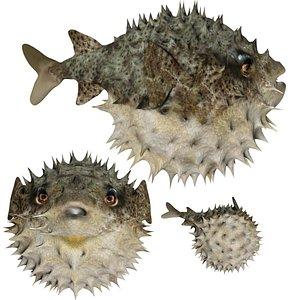 Puffer fish blow fish 3D model