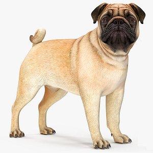 pug dog rigged model