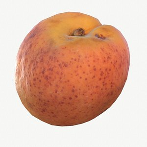 3D 08 apricot fruit modeled model
