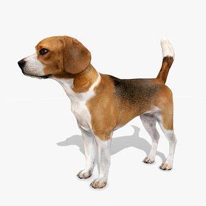 Beagle 3D model