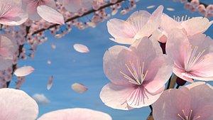 Cherry Blossoms 3D model