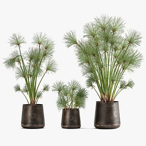 3D Cyperus papyrus in a rust pot for the interior 1048