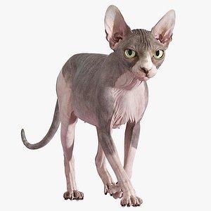 3D model sphynx cat animations