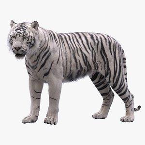 White Tiger RIGGED 3D model