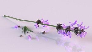 plant lavender flower spices 3D model