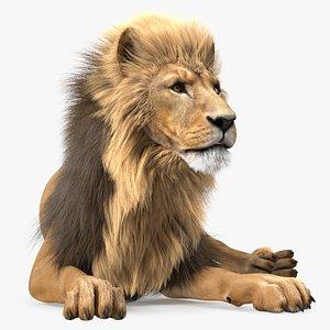 3D Lion Lying Pose Fur model