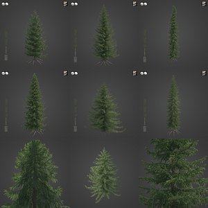 3D 2021 PBR Serbian Spruce Collection - Picea Omorika