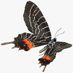 3D Animated Flight Bhutan Glory Butterfly with Fur