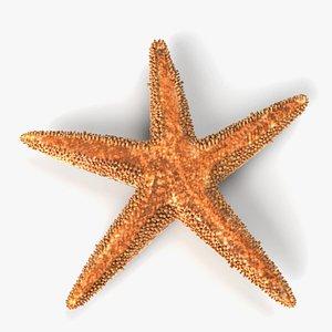 3D starfish star fish