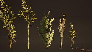 3D herb