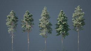 3D pine trees nature