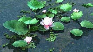 Lotus leaf pond lake 3D